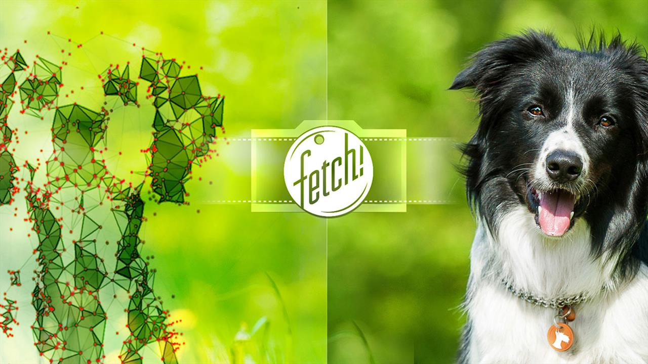 Microsoft Fetch! app will guess the breed of your dog or friends